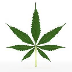 herbal marijuana picture 5