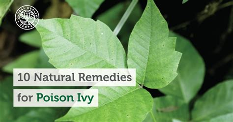 herbal cures for poison oak picture 2