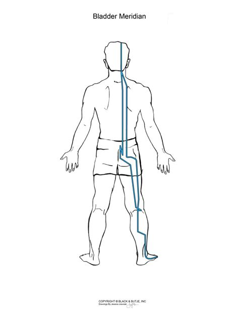 back pain after cystourethrography with bladder intention picture 10