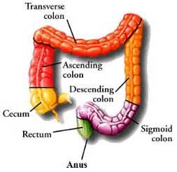 colon diagram picture 5