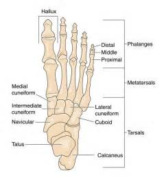 bone and joint specialists picture 2