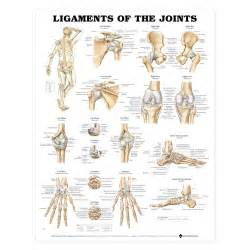 joints picture 3