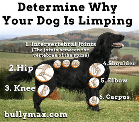 canine joint pain picture 5