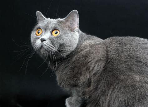 cat liver failure picture 9