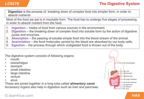 term paper on the digestion of a peanuter picture 8