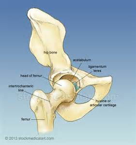 hip & joint picture 13