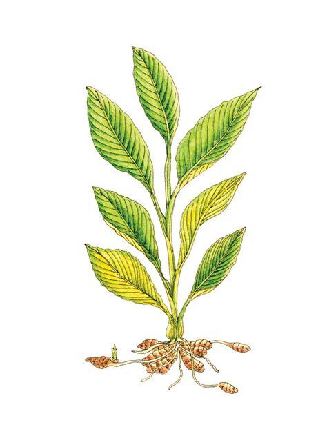 walmart herbal picture 6