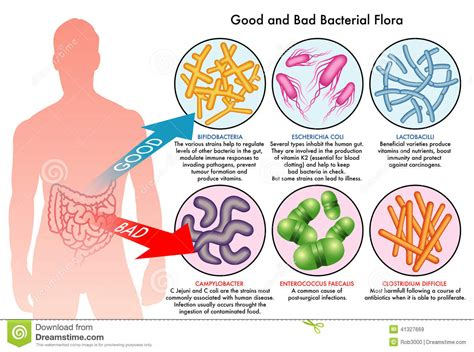 bacteria of the colon picture 2