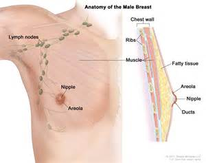 the history of female breast picture 3