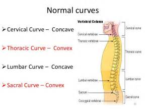 inflammation and sacral joint picture 5