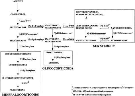 are estrogen and testosterone steroid hormones picture 5