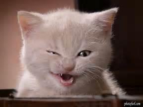 alberta teeth whitening picture 18