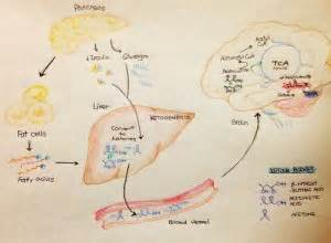 bhb for fatty liver picture 5