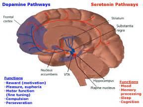 herbal dopamine reuptake inhibitor picture 11