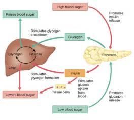 can stress elevate blood sugar in non diabetics picture 18