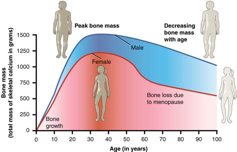testosterone therapy for young s picture 2