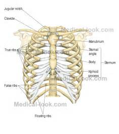 Muscle pain in rib cage picture 3