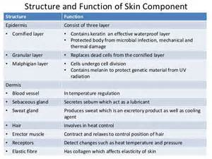 function of keratin picture 2