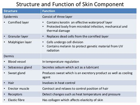 function of keratin picture 1
