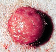 dog skin tumor red picture 9