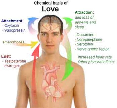 pheromones psychology definition picture 7