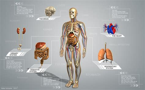 skin anatomy picture 11