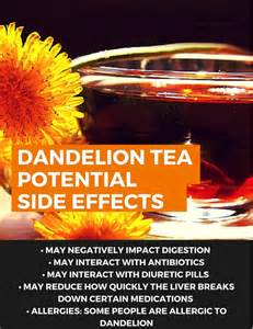 dandelion root effects in men picture 2