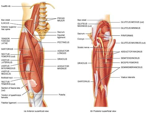 bicep muscle pain picture 6
