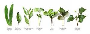 herbal home remedies picture 6