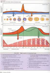 what effect will gynaecosid cause on a breastfeeding picture 17