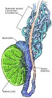 Epidytimis repair picture 2