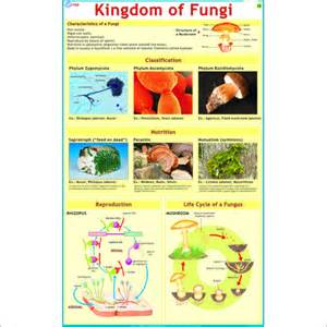 types of mold or fungus that enter a picture 2