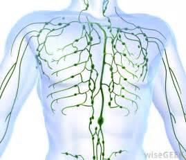 autoimmune thyroiditis disease armpit lymph nodes picture 5