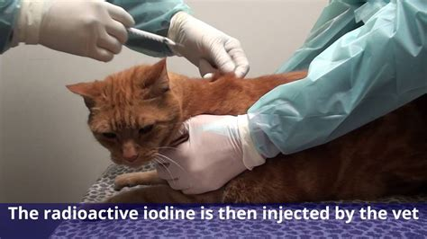 cat hyperthyroid joint pain relief picture 1
