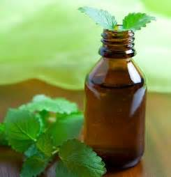 peppermint essential oil picture 3
