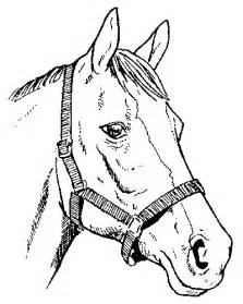 relief cu cai picture 3