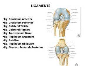 knee joint images picture 1