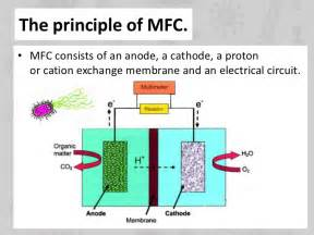 microbial fuel cells picture 6