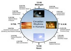 sleep wake cycle picture 13