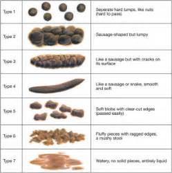 pellet type bowel movements picture 5