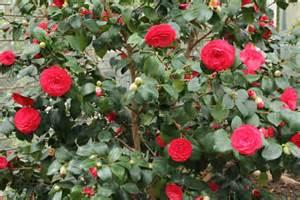 microdermx camellia oil picture 5