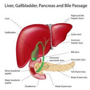 gall bladder ailment treatments picture 1