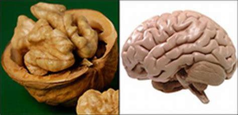 walnut size cancer brain tumor picture 15