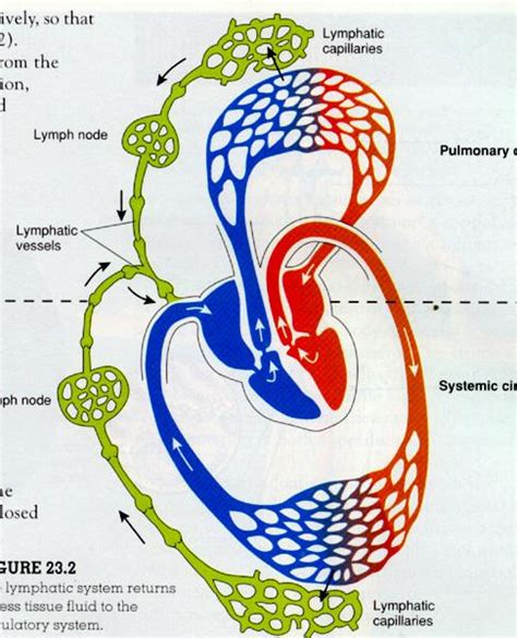 circulation picture 2