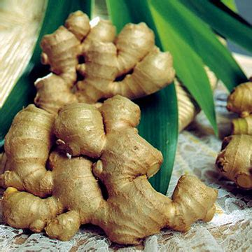 african herbal remedies flower roots picture 11