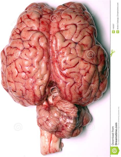 pic of a real human liver picture 1