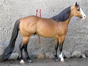 horses and cinch muscle under chest picture 10