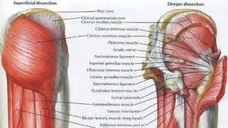 muscle spasms in the gluteus maximus picture 1