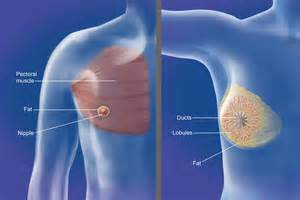 how female breast develop pictures picture 1