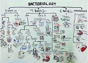 microbiology antimicrobial therapy picture 10